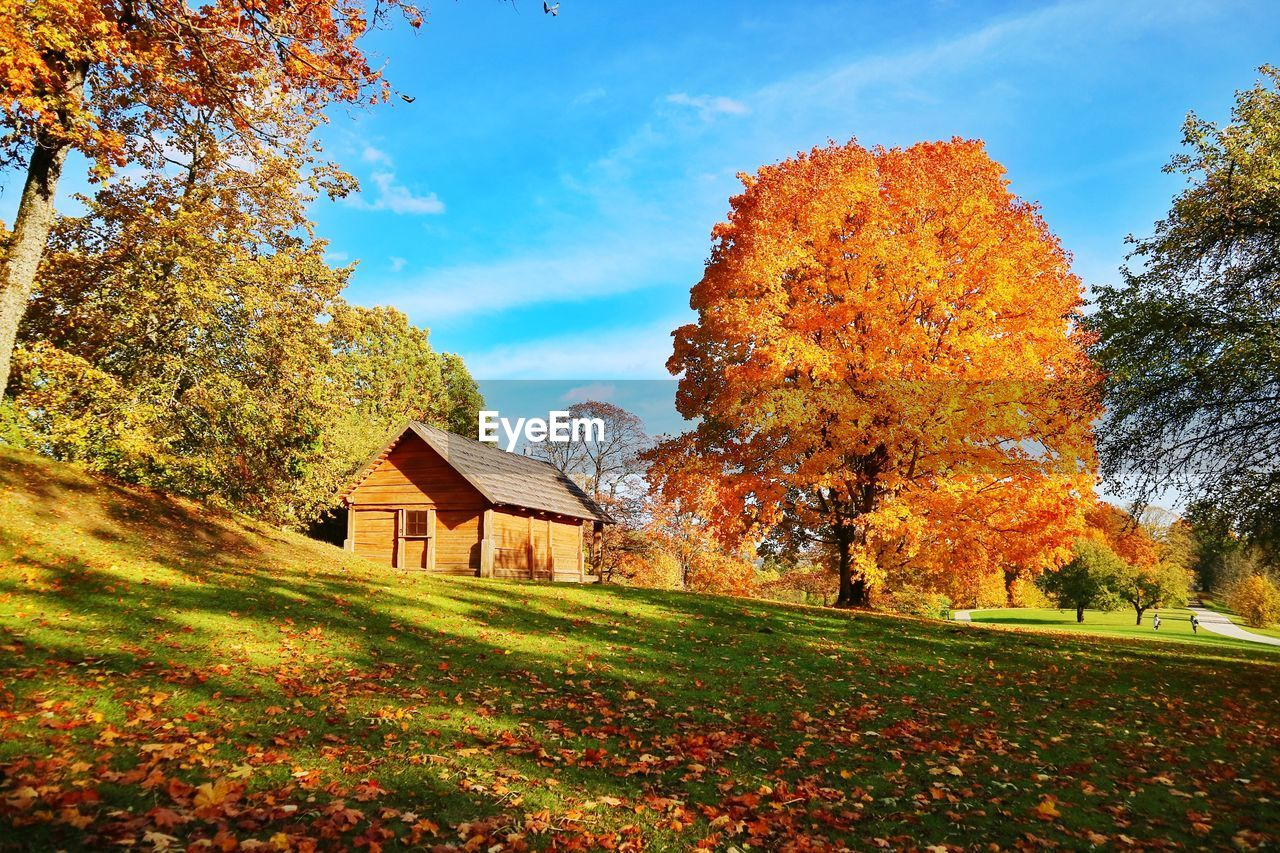plant, autumn, tree, change, sky, built structure, nature, architecture, beauty in nature, grass, growth, field, orange color, day, land, cloud - sky, no people, tranquility, building exterior, tranquil scene, outdoors, fall