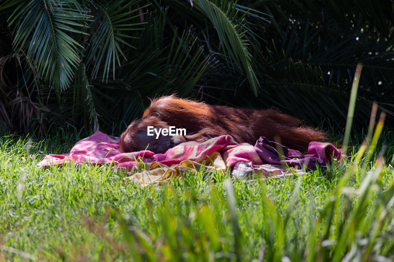 plant, grass, mammal, animal themes, relaxation, one animal, green color, animal, nature, dog, canine, growth, domestic, resting, vertebrate, domestic animals, pets, land, lying down, no people, outdoors, animal head