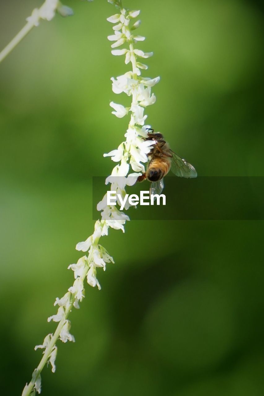 insect, one animal, animal themes, animals in the wild, nature, flower, growth, bee, fragility, beauty in nature, pollination, plant, no people, day, outdoors, freshness, animal wildlife, close-up, buzzing