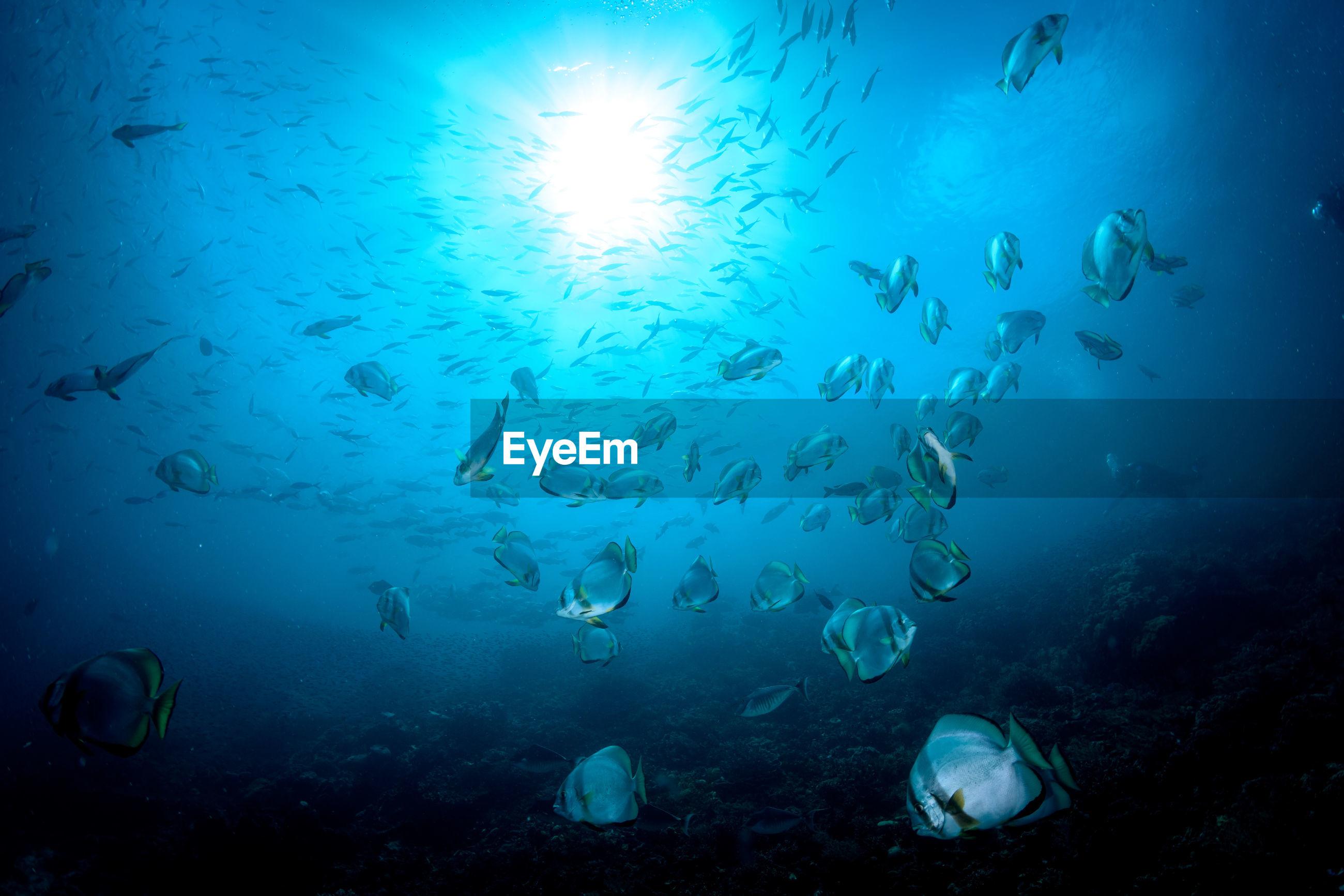 UNDERWATER VIEW OF FISH SWIMMING