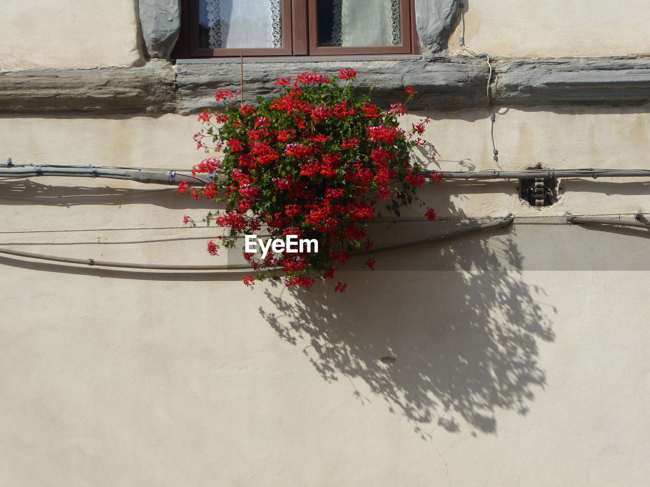 flower, flowering plant, plant, nature, no people, beauty in nature, day, built structure, wall - building feature, freshness, building exterior, architecture, fragility, growth, window, close-up, vulnerability, outdoors, flower head, water