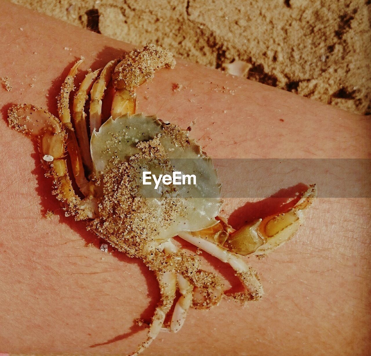 High angle view of crab covered with sand on wooden plank