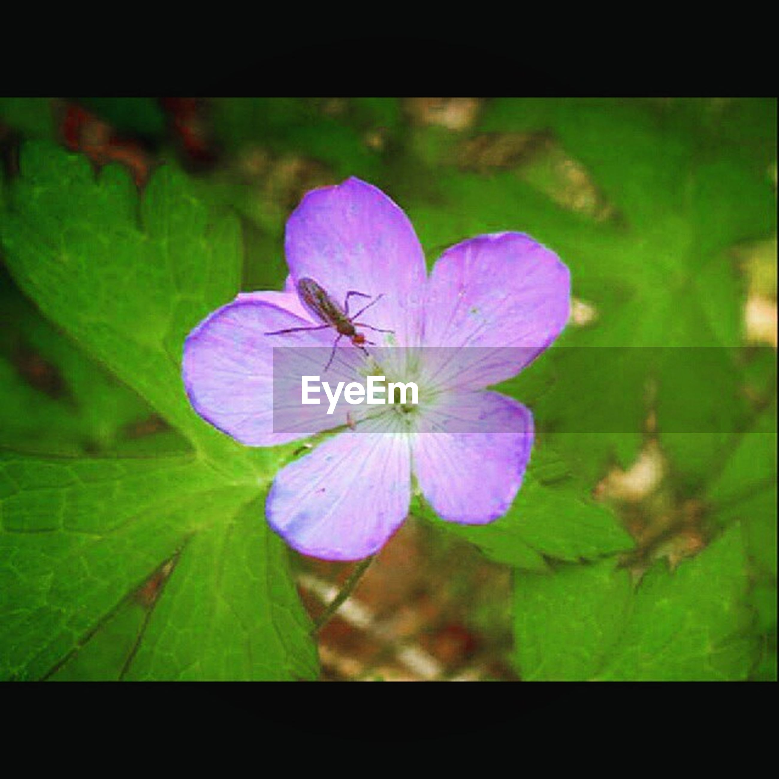 flower, freshness, petal, fragility, flower head, growth, beauty in nature, transfer print, close-up, blooming, purple, nature, leaf, plant, single flower, focus on foreground, auto post production filter, in bloom, pollen, blossom