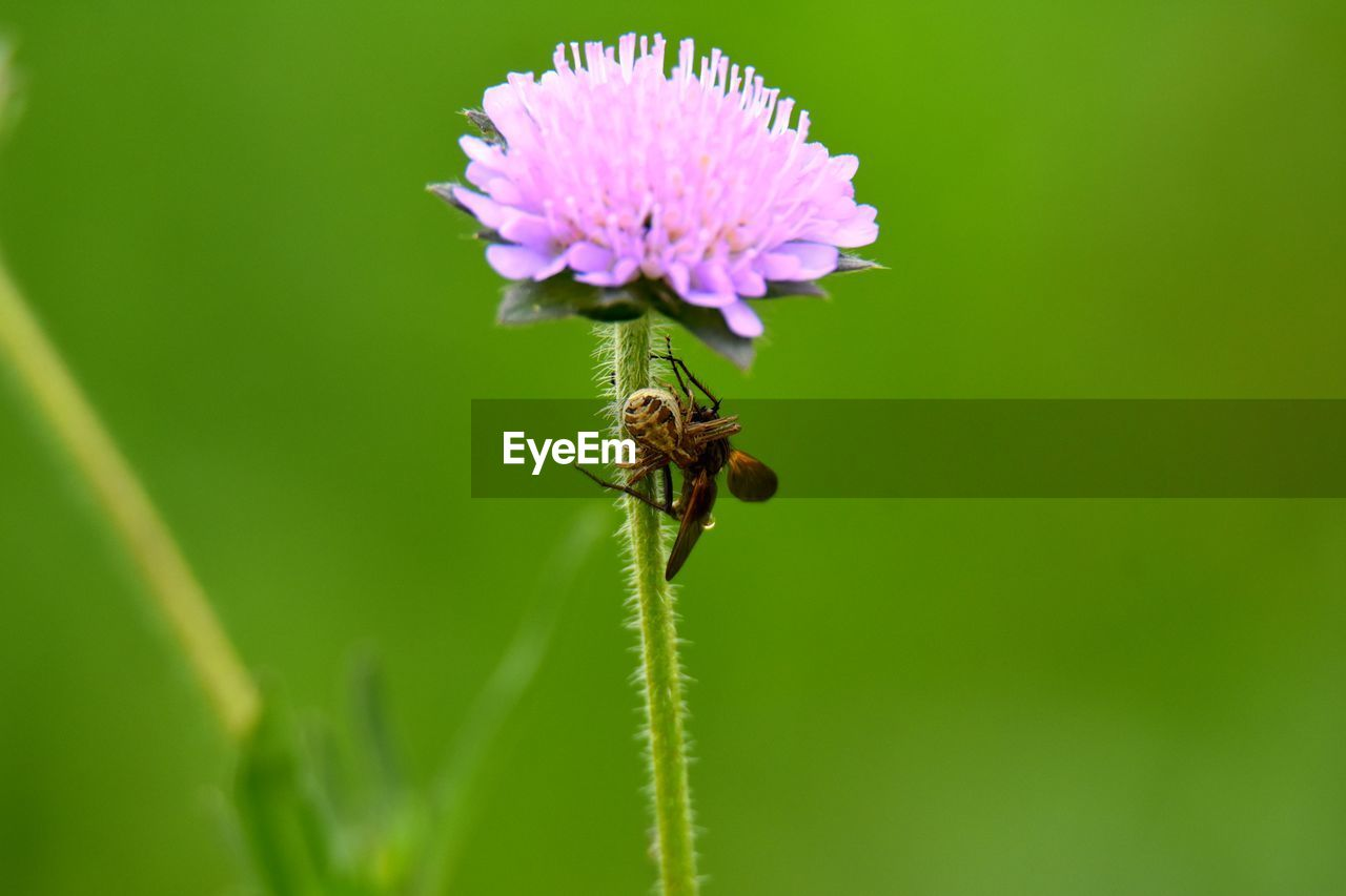 animal, flower, animal themes, plant, insect, invertebrate, animal wildlife, animals in the wild, flowering plant, one animal, beauty in nature, close-up, green color, fragility, growth, vulnerability, nature, no people, bee, freshness, flower head, pollination, outdoors, purple