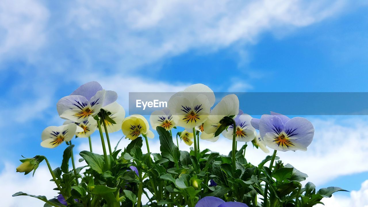 Low Angle View Of Flowers Blooming Against Blue Sky