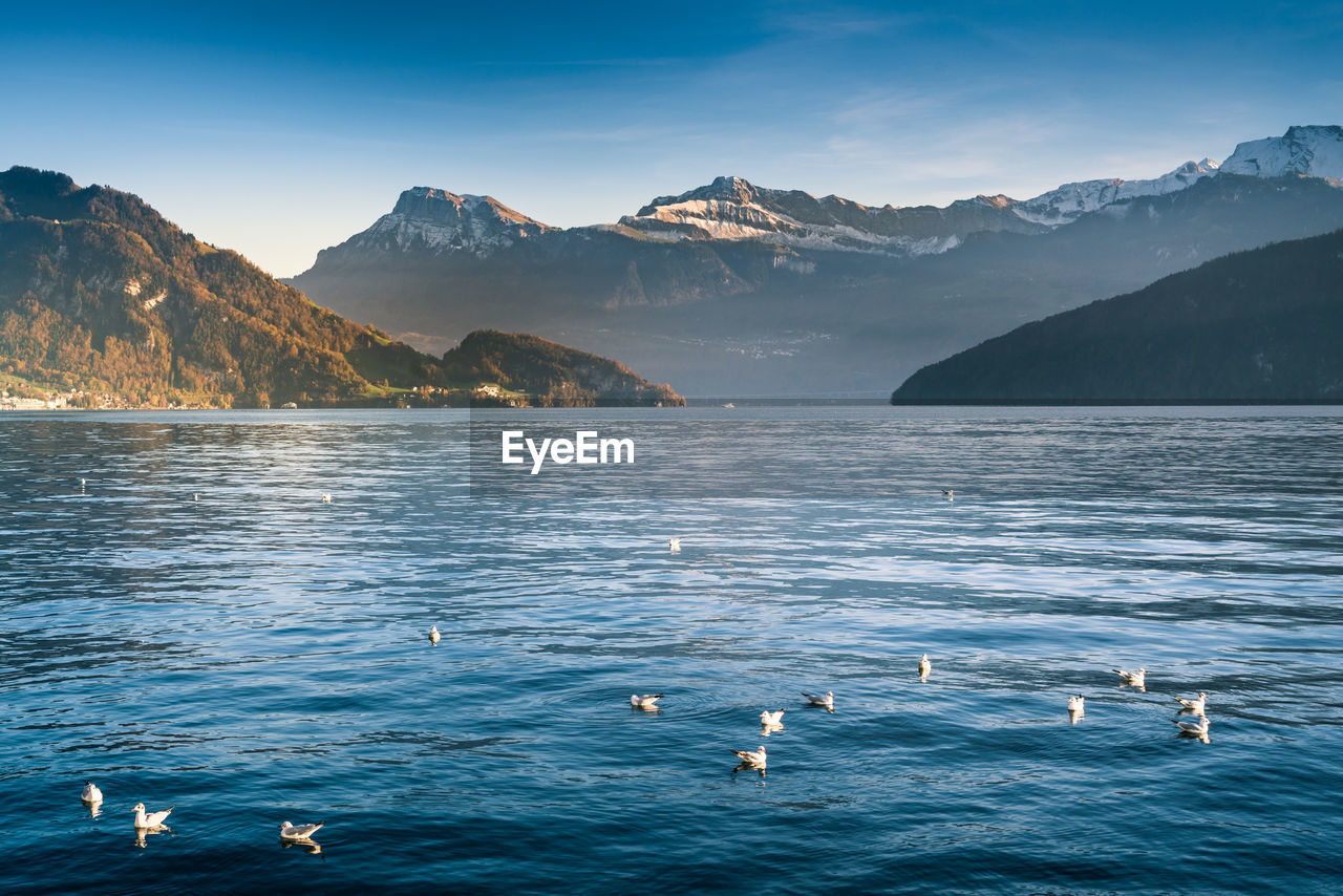 Birds Over Lake Against Mountains