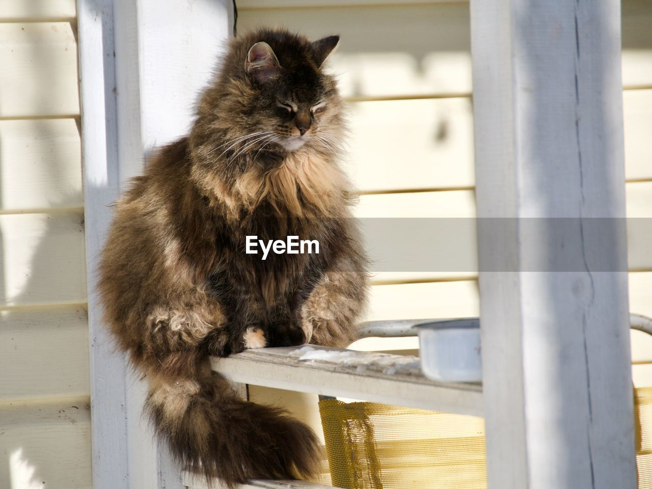 mammal, animal themes, animal, domestic, one animal, cat, domestic cat, pets, domestic animals, feline, vertebrate, sitting, no people, looking, day, wood - material, looking away, outdoors, portrait, relaxation, whisker, maine coon cat