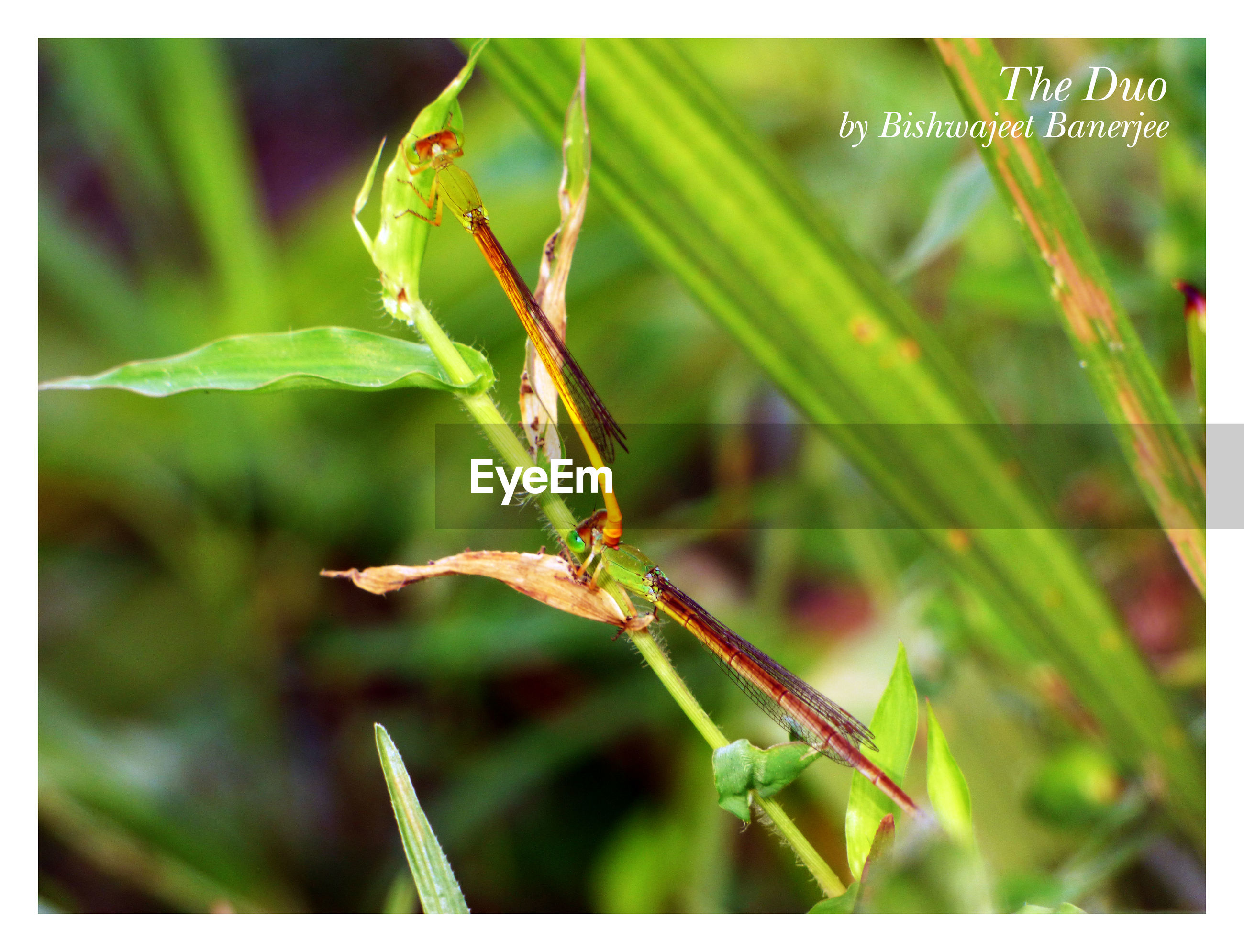 transfer print, auto post production filter, close-up, plant, leaf, green color, focus on foreground, one animal, growth, wildlife, animal themes, nature, insect, selective focus, stem, animals in the wild, day, twig, outdoors, no people