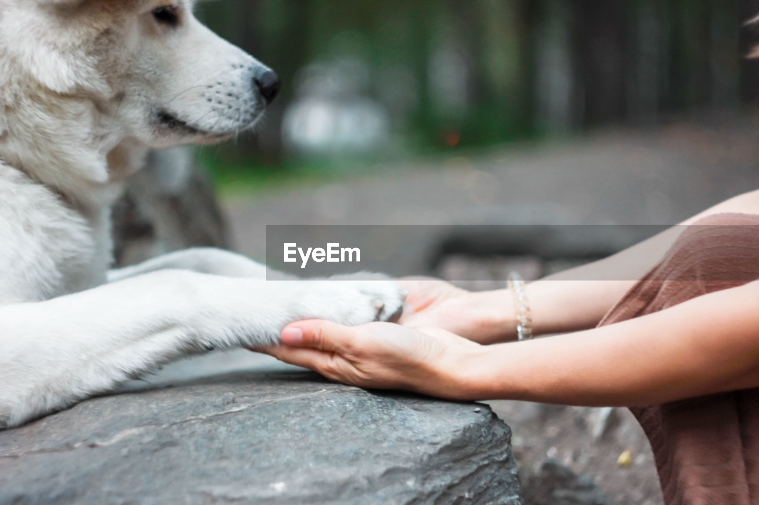 CLOSE-UP OF HAND HOLDING DOG AGAINST BLURRED MOTION