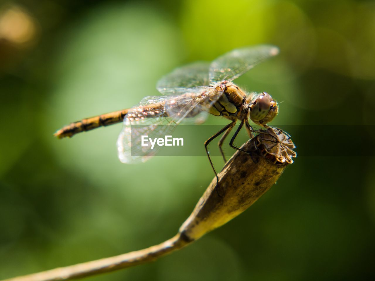 invertebrate, insect, animal wildlife, animal, animals in the wild, close-up, one animal, animal themes, focus on foreground, plant, day, animal wing, selective focus, nature, no people, green color, leaf, plant part, zoology, outdoors