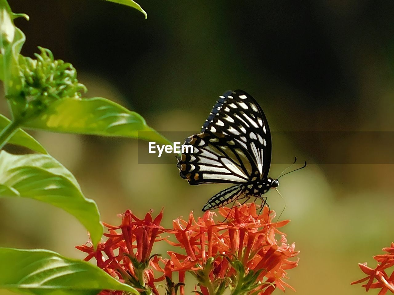 invertebrate, insect, animal wildlife, animals in the wild, animal themes, one animal, animal, animal wing, plant, butterfly - insect, beauty in nature, flower, plant part, leaf, close-up, growth, flowering plant, nature, focus on foreground, no people, flower head, outdoors, pollination, butterfly