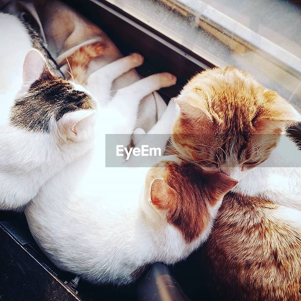 domestic animals, pets, domestic, animal themes, animal, mammal, cat, domestic cat, group of animals, feline, vertebrate, two animals, high angle view, indoors, no people, sleeping, close-up, relaxation, eyes closed, whisker, animal family