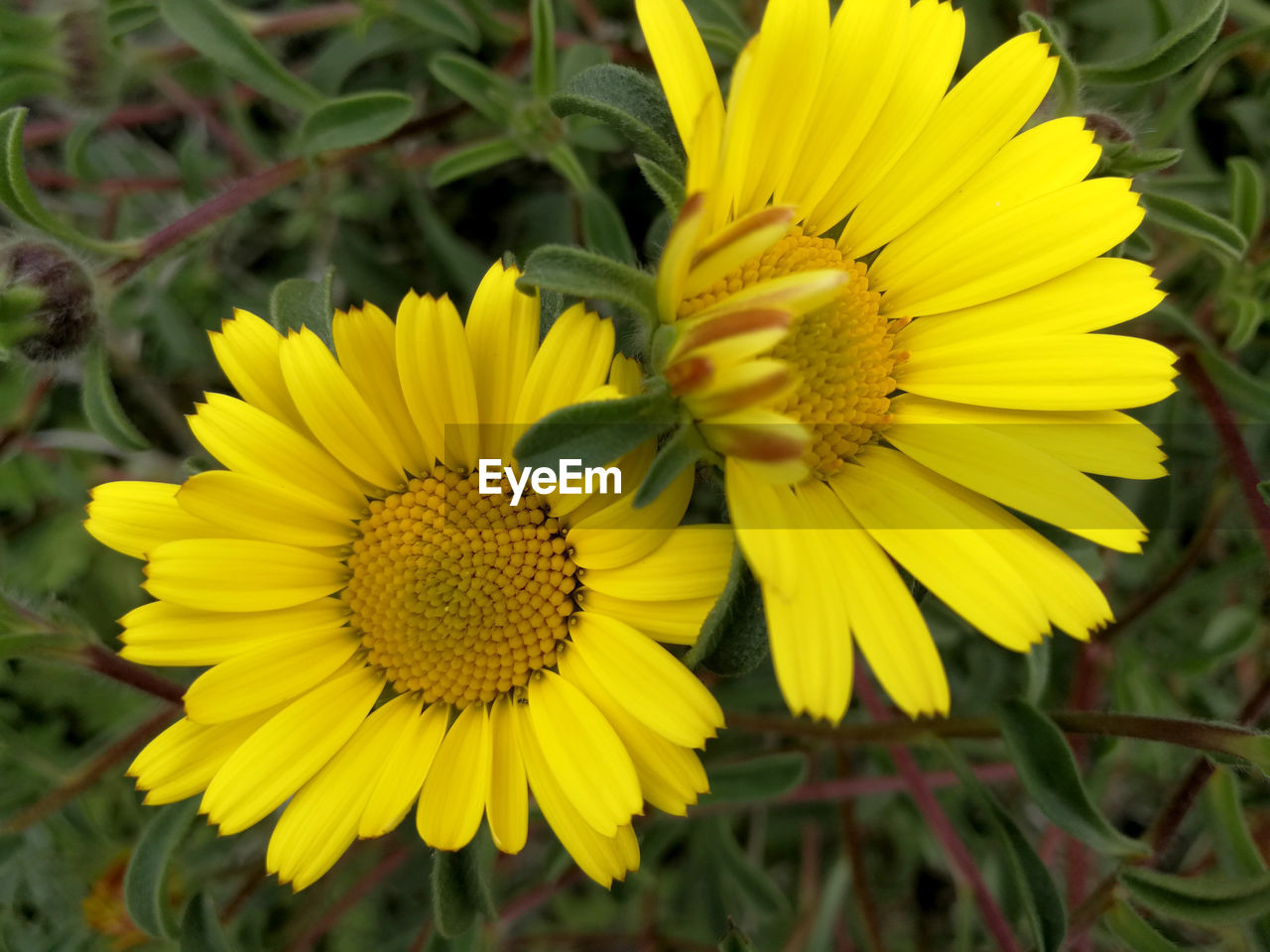 flower, yellow, petal, fragility, growth, nature, beauty in nature, freshness, flower head, plant, blooming, sunflower, outdoors, no people, day, close-up