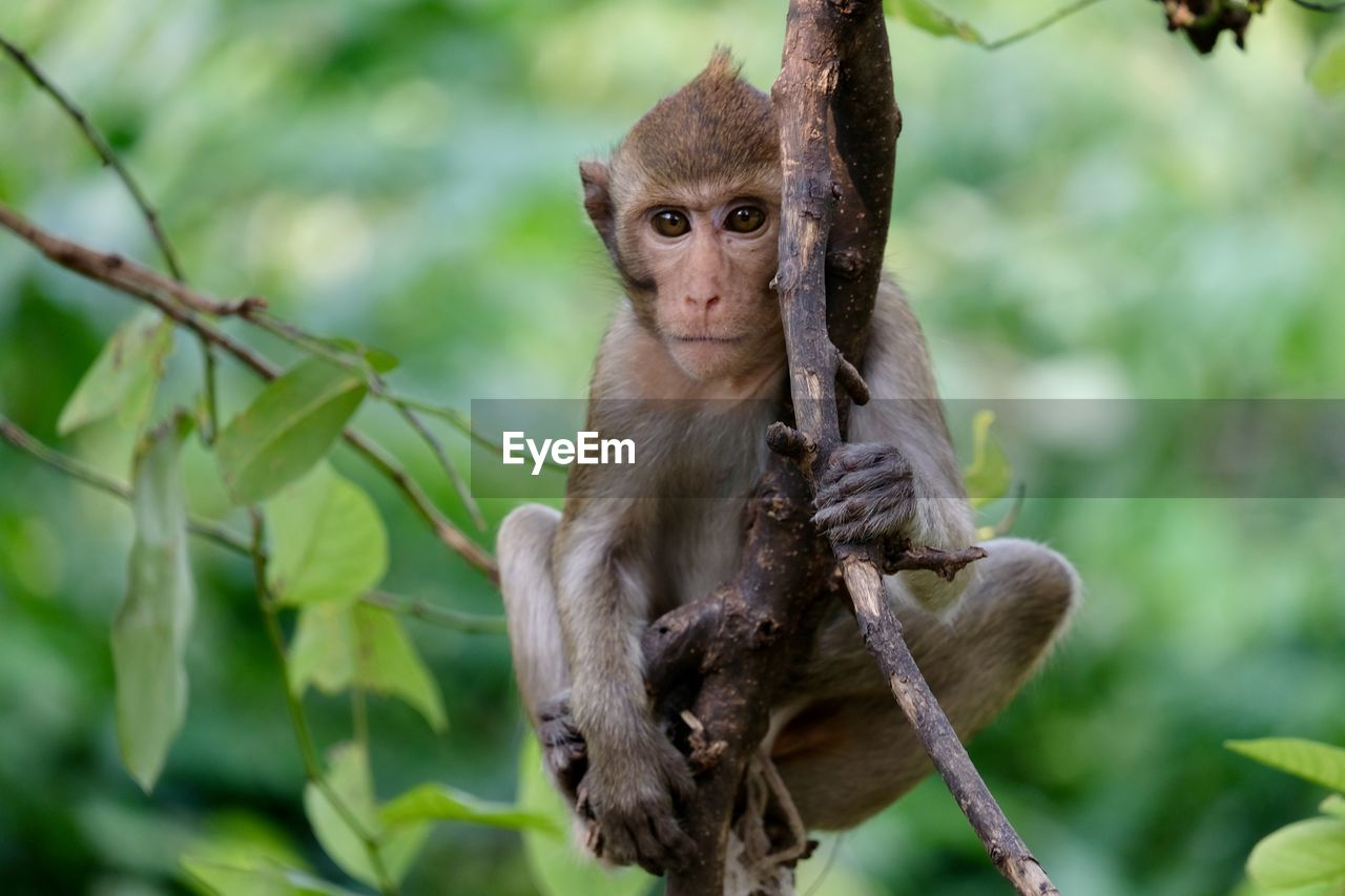 primate, animals in the wild, mammal, animal wildlife, vertebrate, focus on foreground, plant, tree, one animal, sitting, branch, young animal, no people, day, nature, outdoors, animal family, care