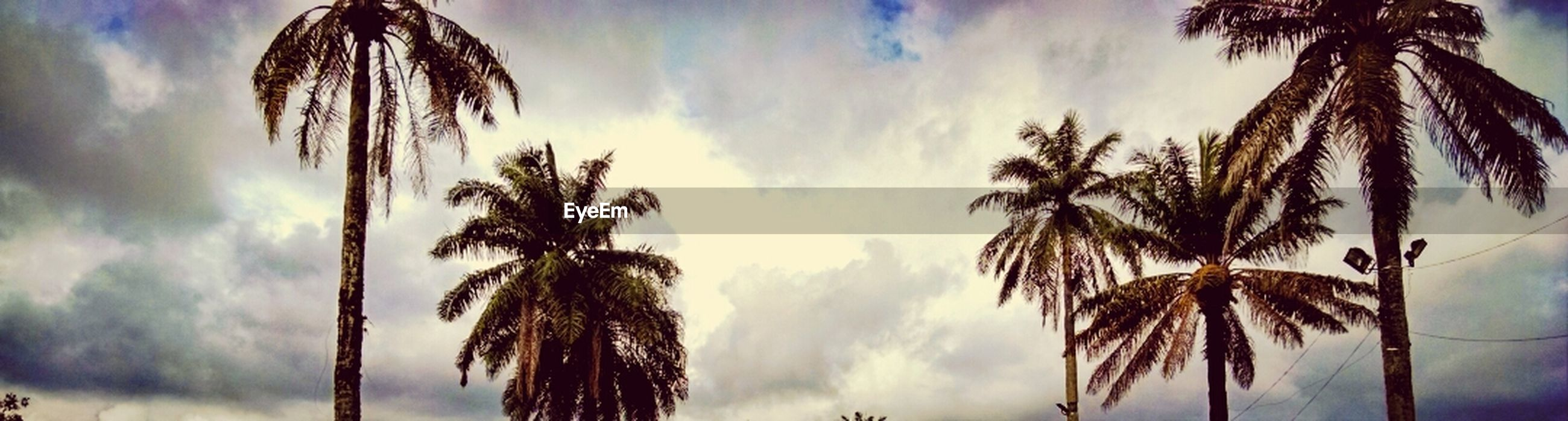 palm tree, sky, low angle view, tree, cloud - sky, cloud, coconut palm tree, cloudy, silhouette, tranquility, tree trunk, nature, beauty in nature, palm leaf, growth, scenics, palm frond, tranquil scene, tall - high, outdoors
