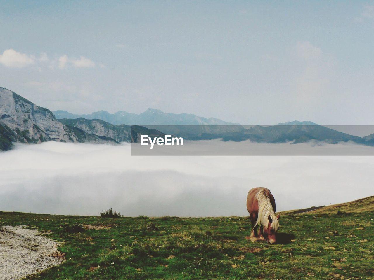 Horse On Mountain Against Sky