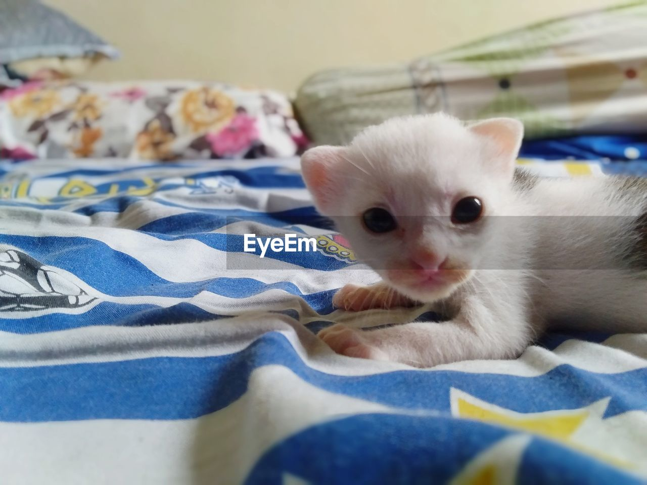 domestic, pets, mammal, animal, animal themes, domestic animals, one animal, domestic cat, vertebrate, cat, feline, bed, indoors, furniture, no people, kitten, young animal, home interior, relaxation, white color, whisker