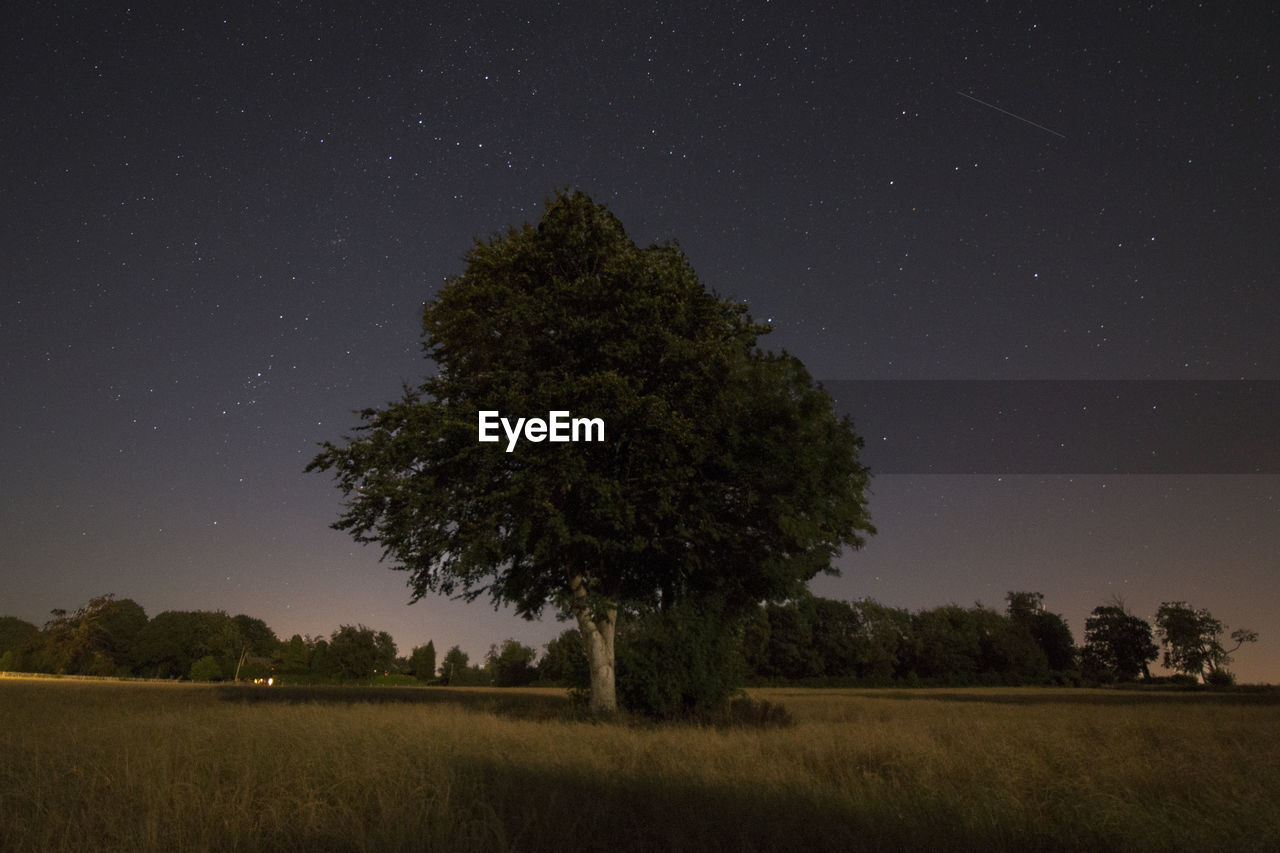 Trees Growing On Field Against Starry Sky