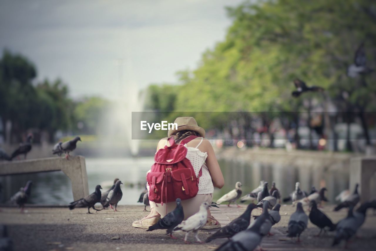 Rear View Of Woman Crouching Amidst Pigeons Against Fountain