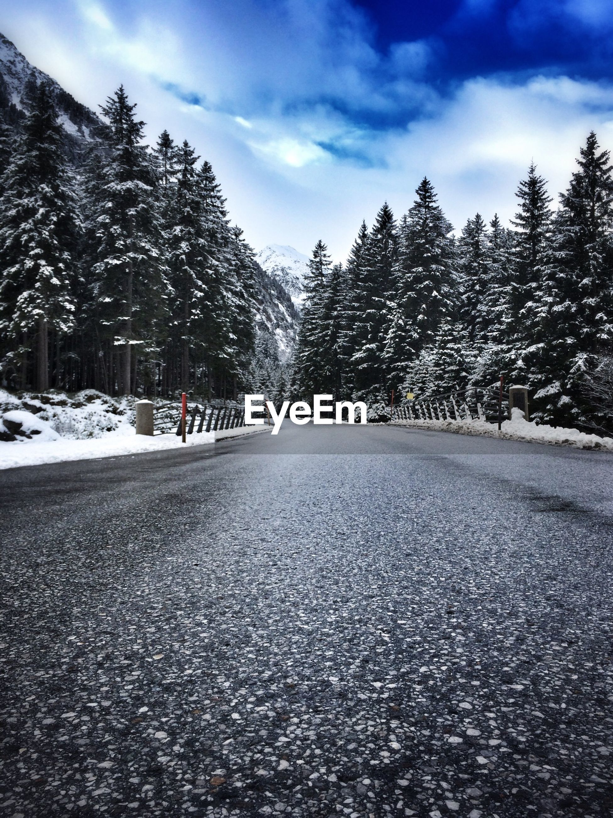 Road in forest in winter