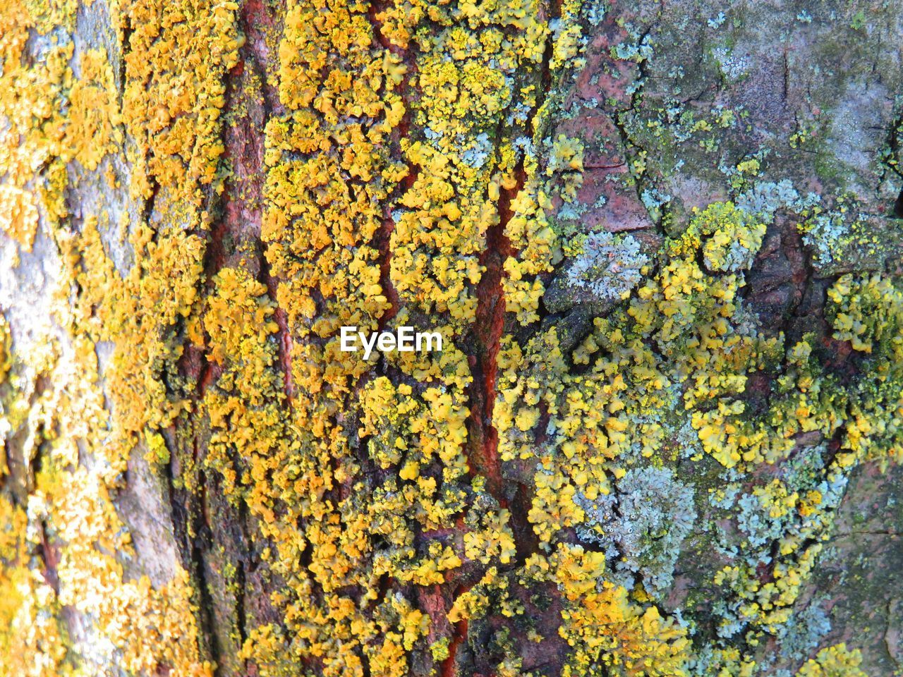 weathered, close-up, yellow, textured, full frame, lichen, backgrounds, rough, day, no people, paint, growth, outdoors, moss, tree trunk, leaf, ivy, fungus, tree, nature