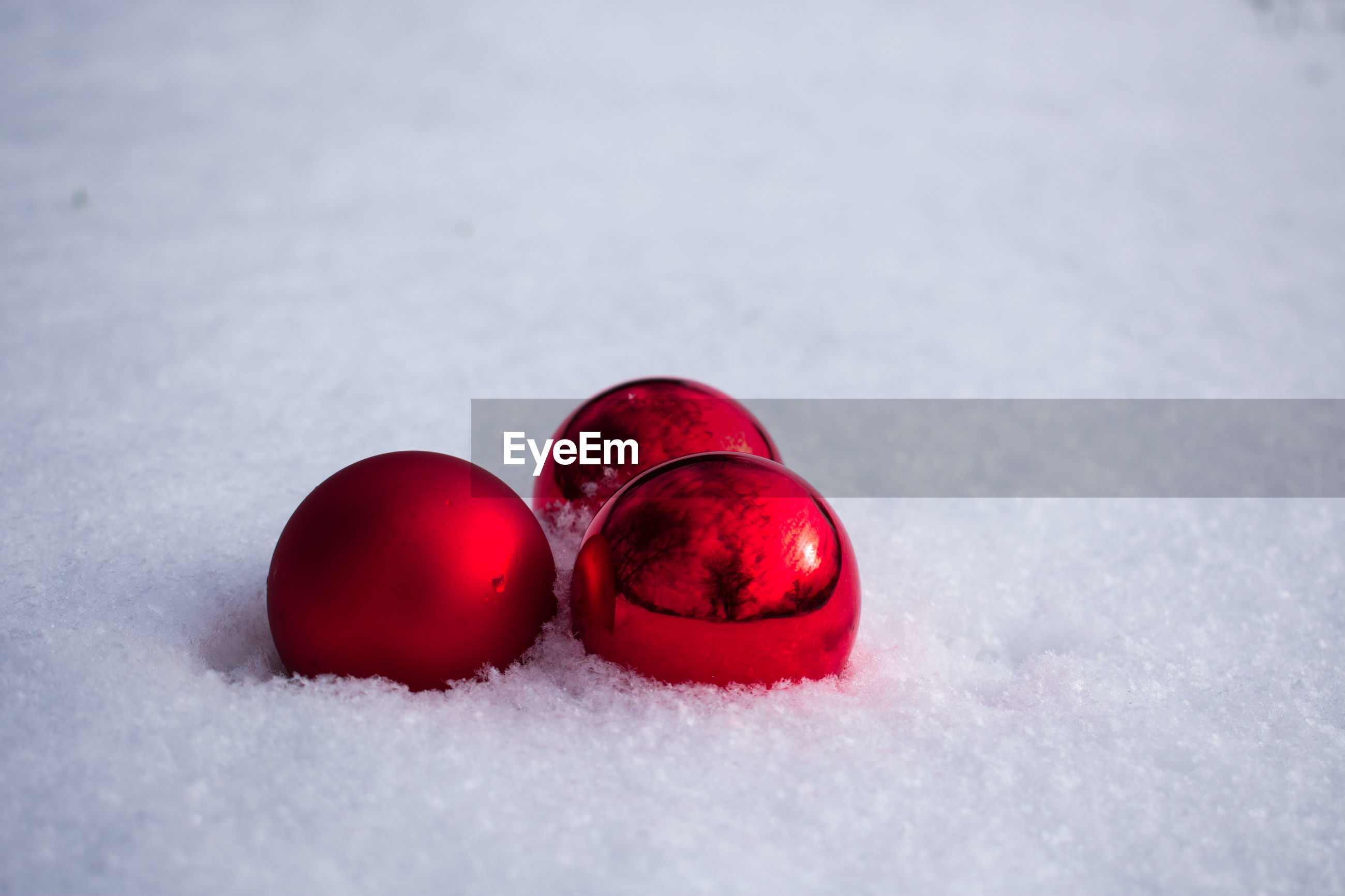 cold temperature, snow, red, winter, nature, white color, close-up, no people, frozen, food, food and drink, healthy eating, field, fruit, covering, land, day, selective focus, freshness, powder snow