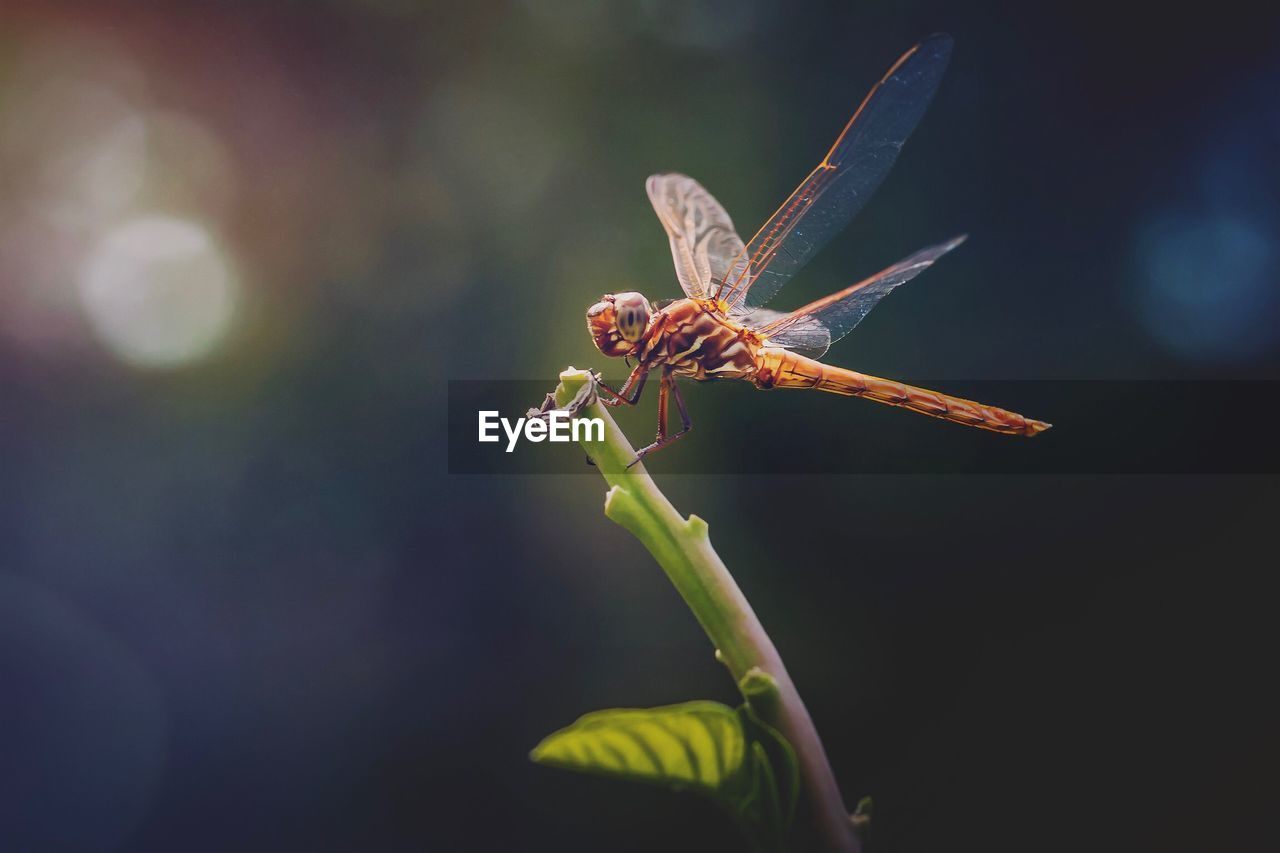 insect, invertebrate, animal themes, animal wildlife, animals in the wild, plant, close-up, animal, one animal, growth, flowering plant, flower, nature, beauty in nature, no people, day, focus on foreground, selective focus, vulnerability, fragility, outdoors, animal wing, flower head, pollination