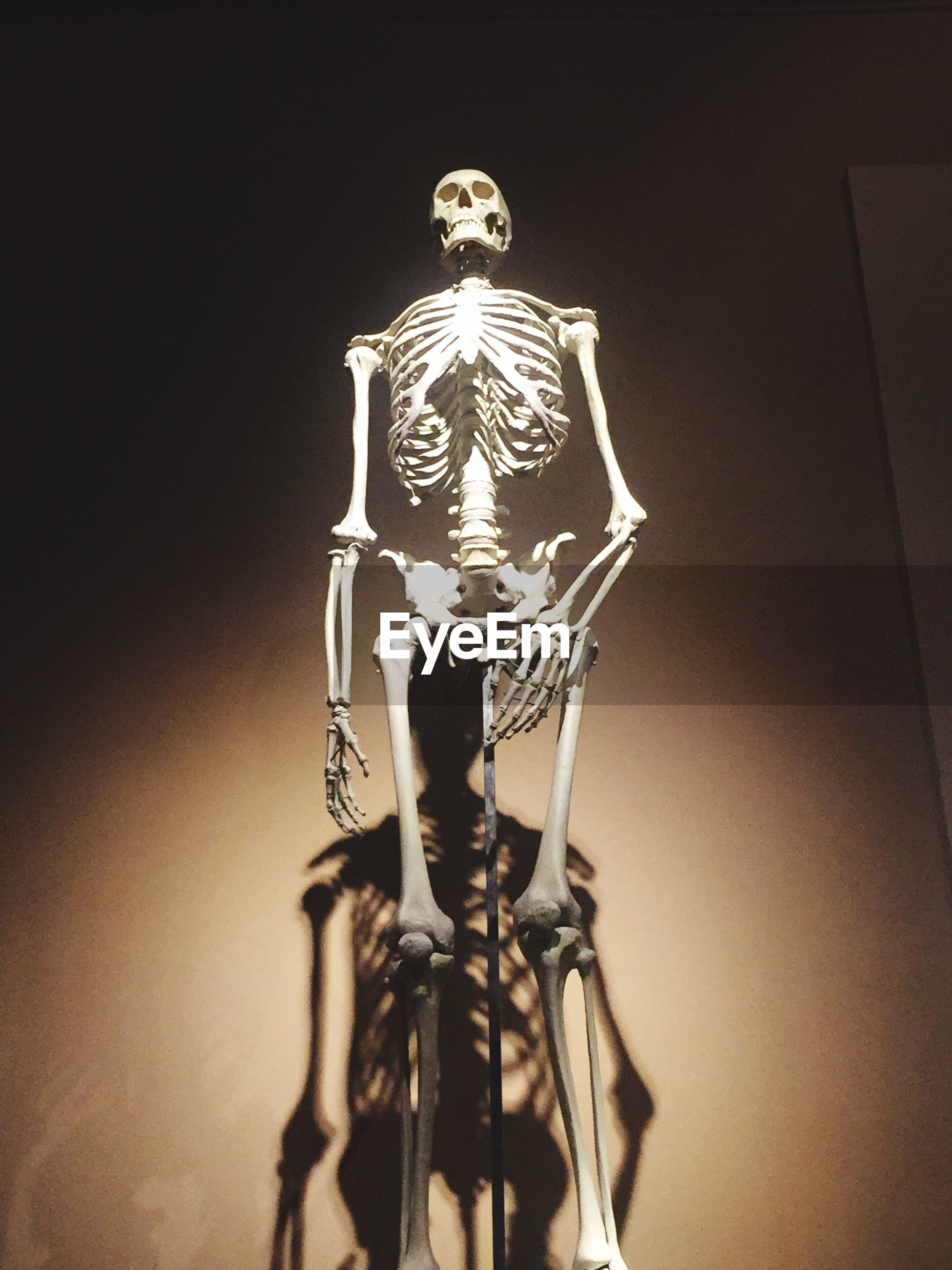 Low angle view of human skeleton against wall