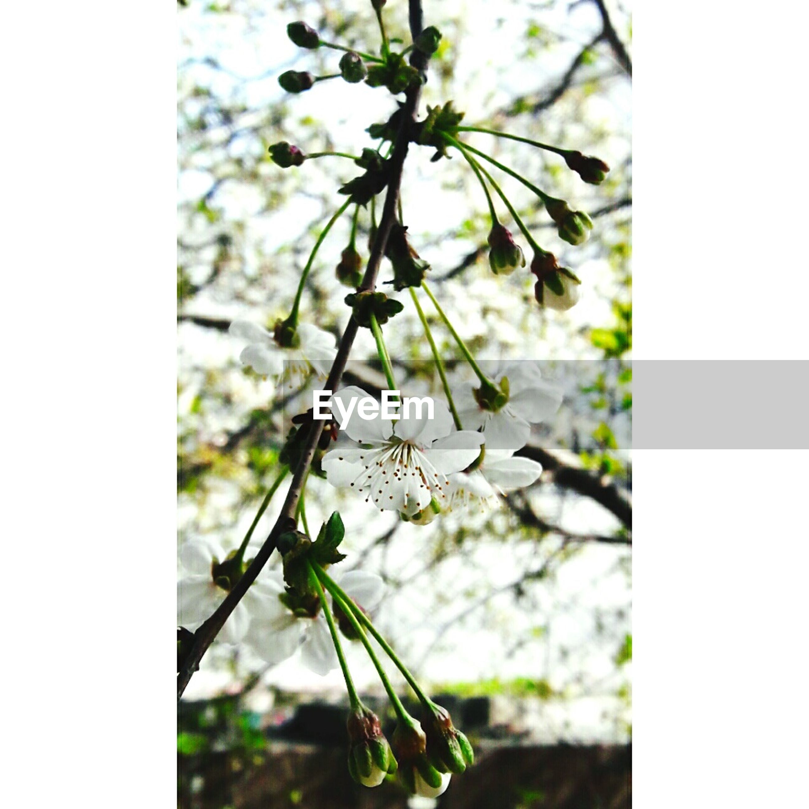 nature, close-up, growth, fragility, no people, outdoors, beauty in nature, tree, day, flower, plant, branch, freshness, vine