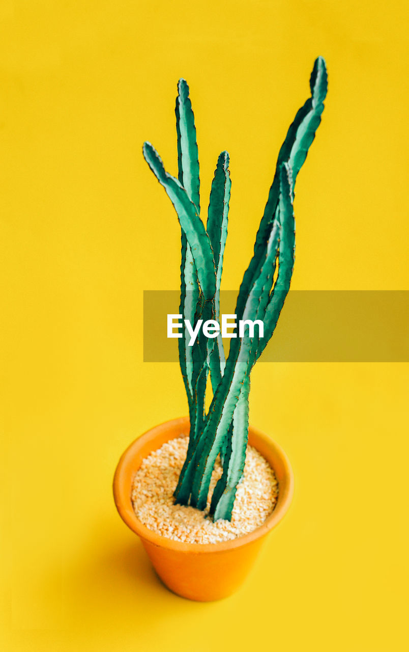 colored background, studio shot, food and drink, food, indoors, close-up, healthy eating, green color, still life, wellbeing, freshness, yellow background, yellow, no people, vegetable, growth, cut out, orange background, plant, nature