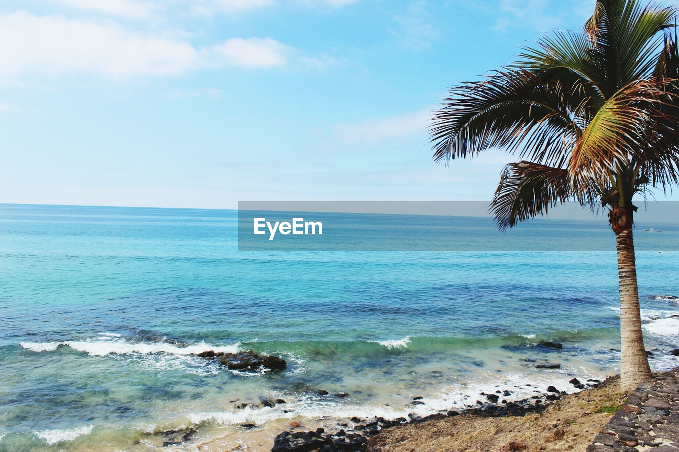 sea, beach, water, horizon over water, tranquility, tranquil scene, scenics, palm tree, sky, shore, beauty in nature, tree, nature, sand, idyllic, coastline, wave, day, outdoors, non-urban scene