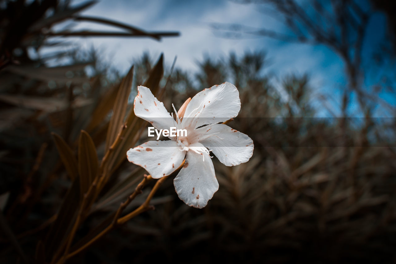white color, plant, petal, flowering plant, growth, beauty in nature, flower, vulnerability, fragility, close-up, freshness, focus on foreground, inflorescence, flower head, no people, nature, selective focus, tree, day, outdoors, pollen
