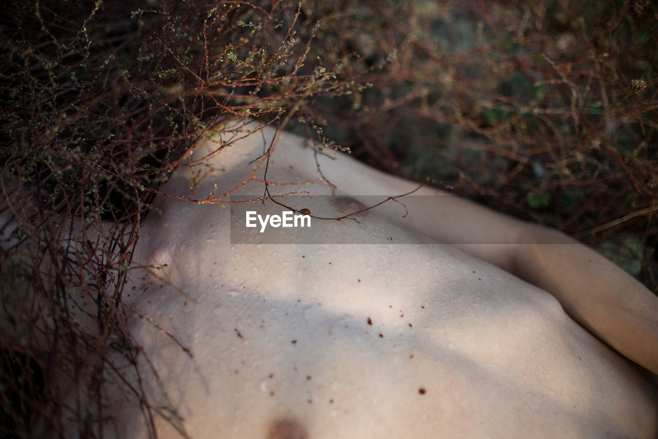 High Angle View Of Shirtless Man Hiding Face With Dried Plants While Lying On Field