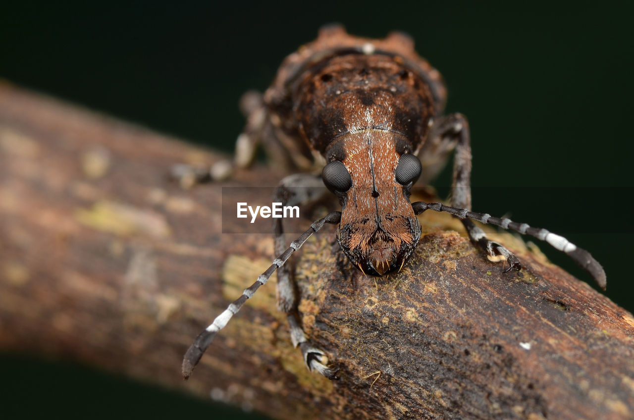 close-up, selective focus, animals in the wild, animal wildlife, animal themes, no people, metal, animal, one animal, nature, insect, rusty, day, tree, outdoors, invertebrate, wood - material, focus on foreground, brown, zoology