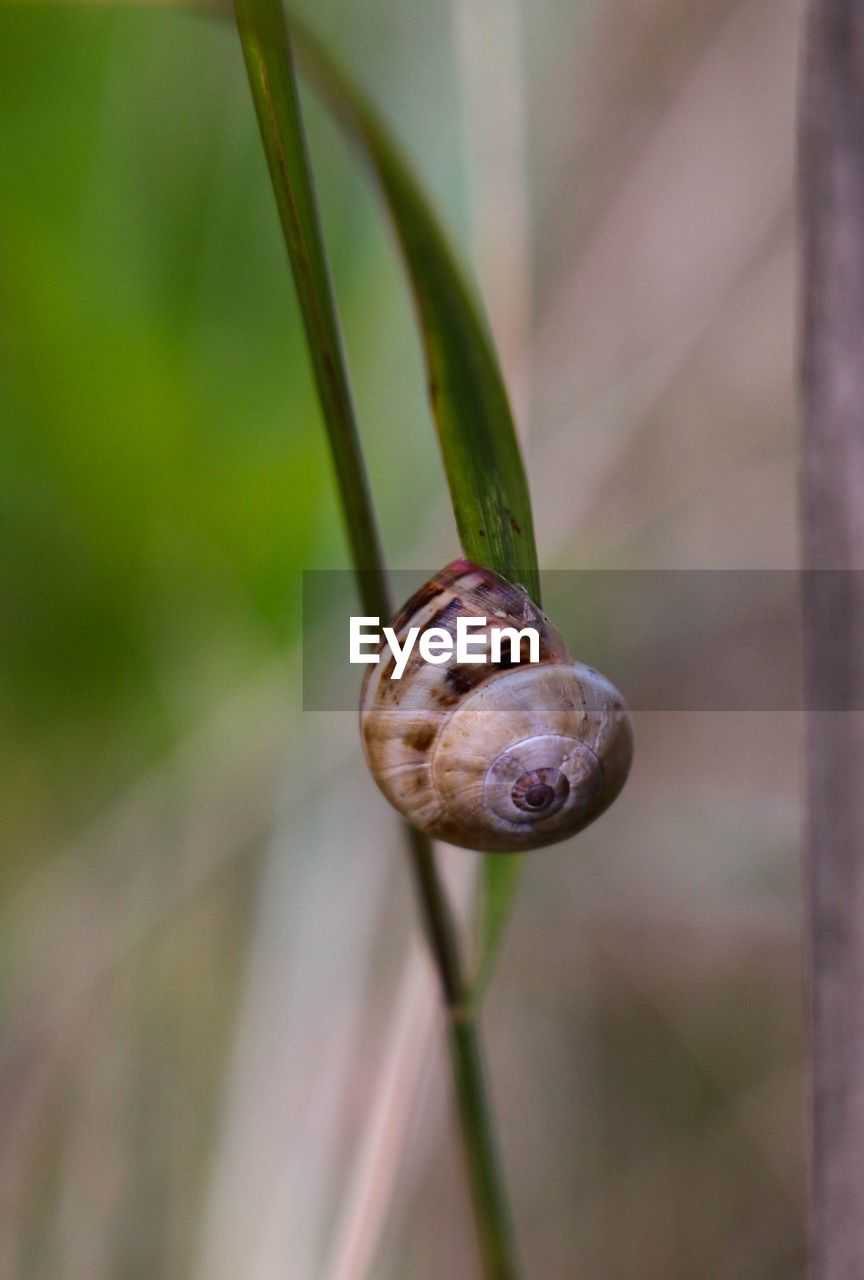 plant, close-up, mollusk, focus on foreground, growth, invertebrate, no people, day, nature, animal, gastropod, one animal, animal themes, animal wildlife, beauty in nature, fragility, plant stem, animals in the wild, snail, shell, outdoors