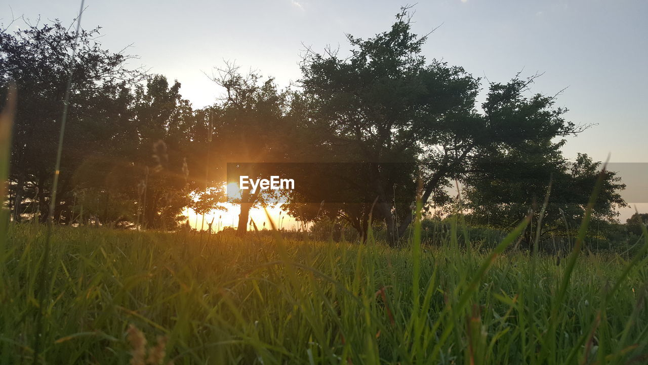 nature, growth, field, sunset, grass, tree, sun, beauty in nature, tranquil scene, tranquility, no people, outdoors, scenics, plant, sunlight, landscape, sky, day