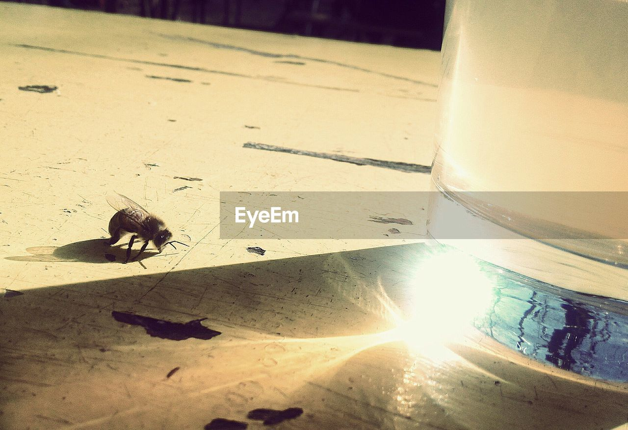 animal themes, table, sunlight, close-up, insect, no people, education, animals in the wild, day, outdoors, nature