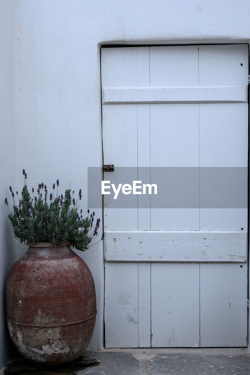 wall - building feature, plant, no people, architecture, built structure, day, wood - material, potted plant, building exterior, growth, outdoors, entrance, door, nature, white color, closed, flower, close-up, flowering plant, still life, flower pot