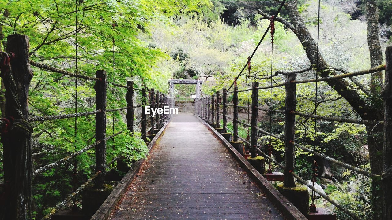tree, plant, the way forward, direction, forest, nature, day, growth, connection, land, no people, railing, architecture, bridge, footpath, tranquility, built structure, transportation, green color, outdoors, diminishing perspective, footbridge