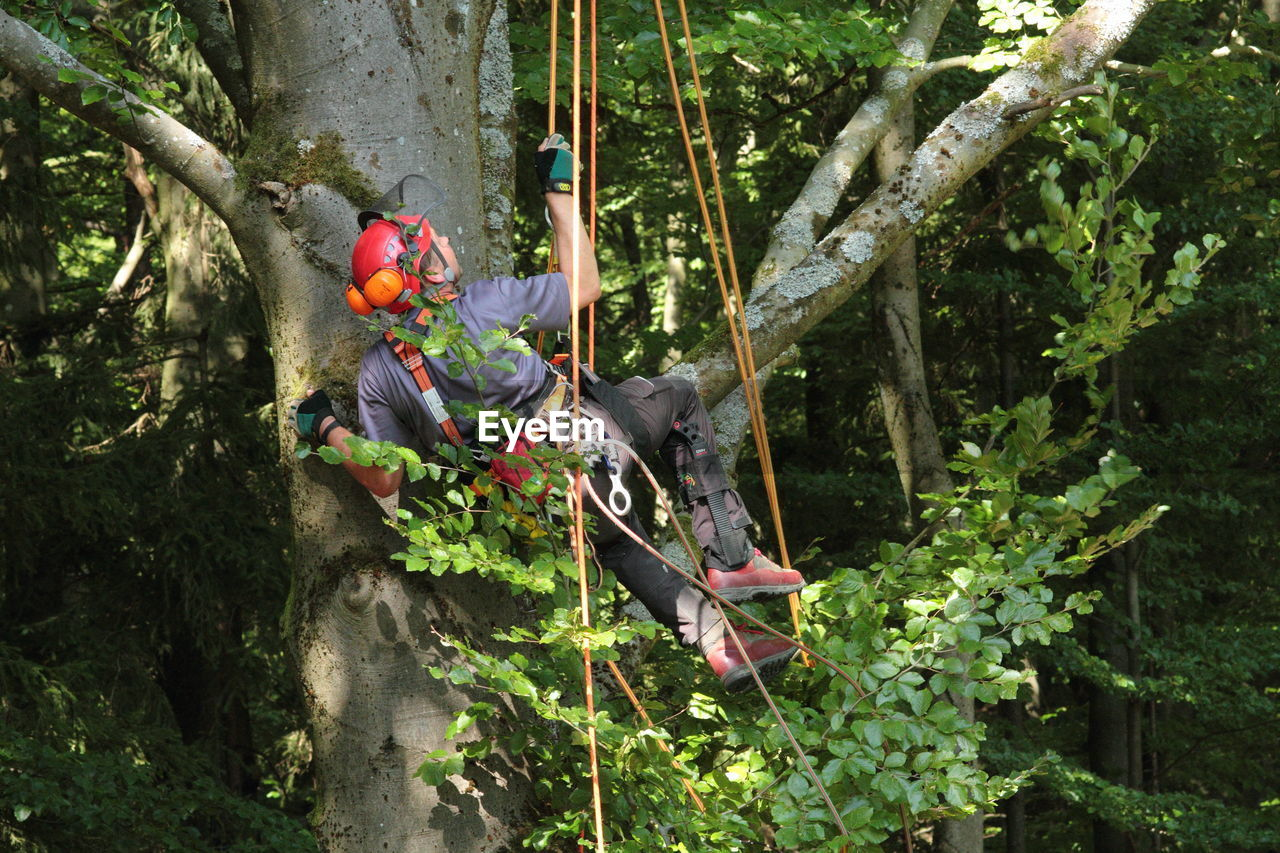 Rear View Of Man Climbing On Tree With Safety Harness