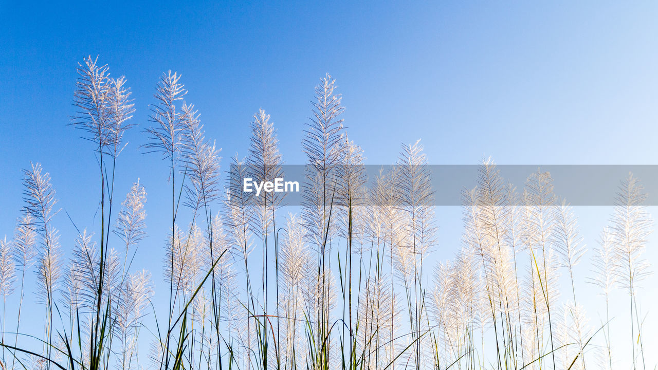 plant, sky, growth, low angle view, no people, beauty in nature, nature, day, clear sky, tranquility, blue, outdoors, tree, sunlight, winter, cold temperature, land, scenics - nature, tranquil scene, copy space, stalk