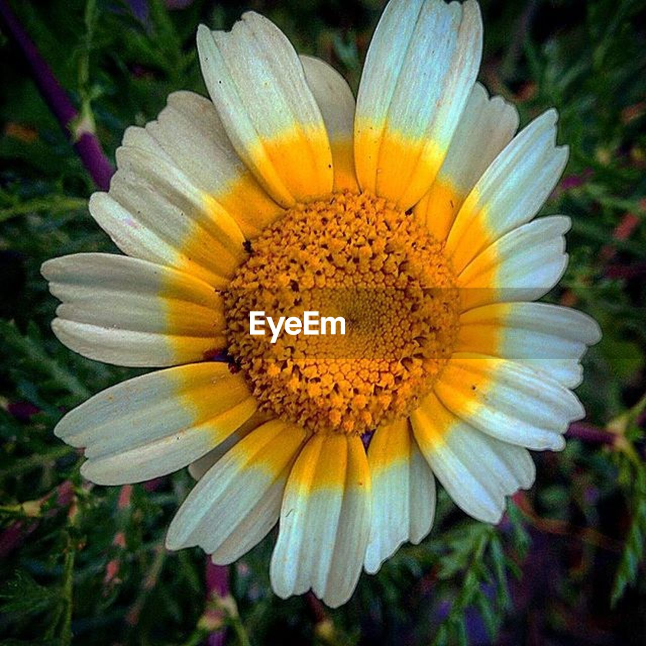 flower, petal, yellow, flower head, fragility, freshness, beauty in nature, nature, growth, plant, outdoors, gazania, pollen, no people, blooming, close-up, day, springtime, stamen