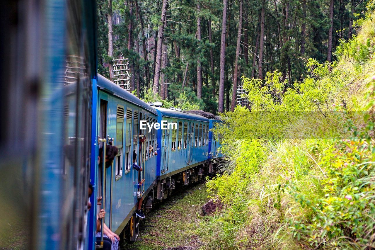 rail transportation, train, train - vehicle, plant, tree, public transportation, transportation, mode of transportation, track, railroad track, land, forest, motion, nature, travel, passenger train, day, on the move, land vehicle, no people, outdoors