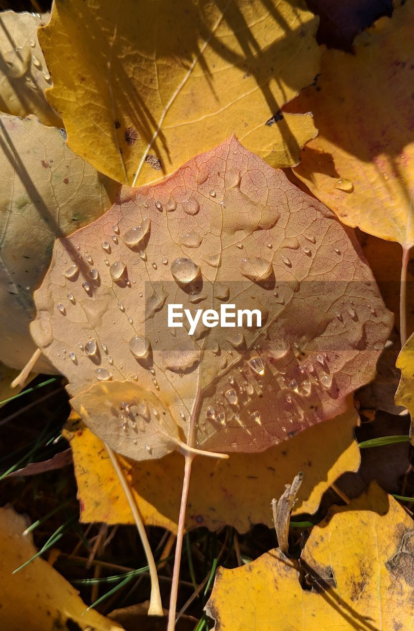 drop, leaf, wet, plant part, beauty in nature, close-up, plant, water, growth, nature, no people, fragility, vulnerability, yellow, day, autumn, high angle view, leaves, focus on foreground, outdoors, rain, raindrop, change, dew, purity, flower