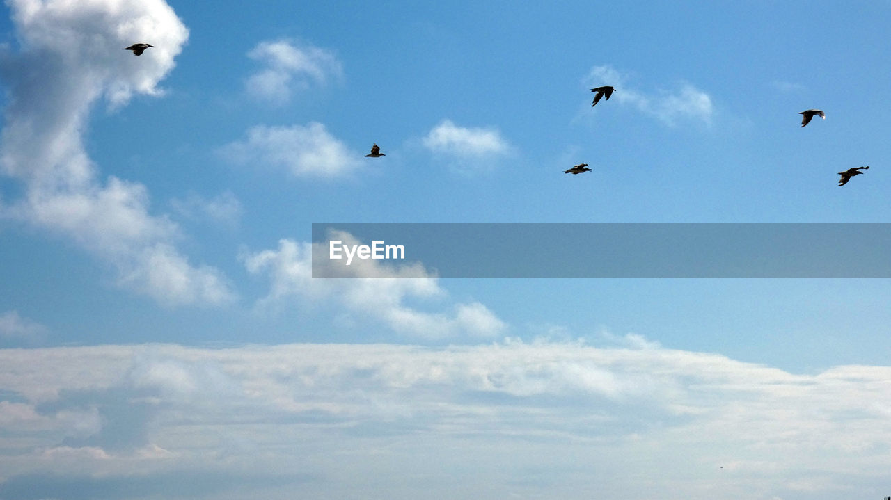 sky, cloud - sky, flying, bird, animal, animal themes, animals in the wild, animal wildlife, vertebrate, group of animals, low angle view, nature, beauty in nature, day, no people, mid-air, motion, tranquility, scenics - nature, outdoors, flock of birds, meteorology