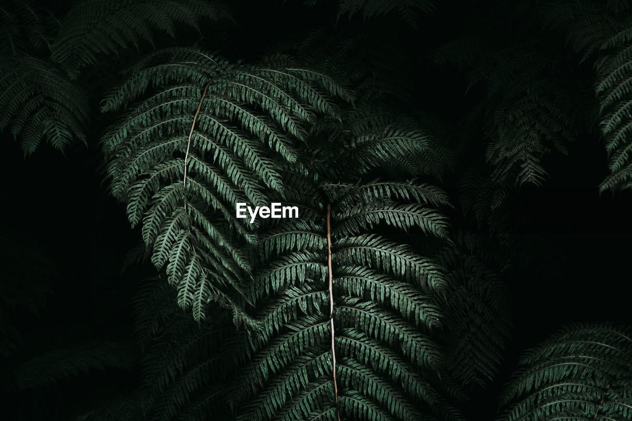 Texture details of fern plant