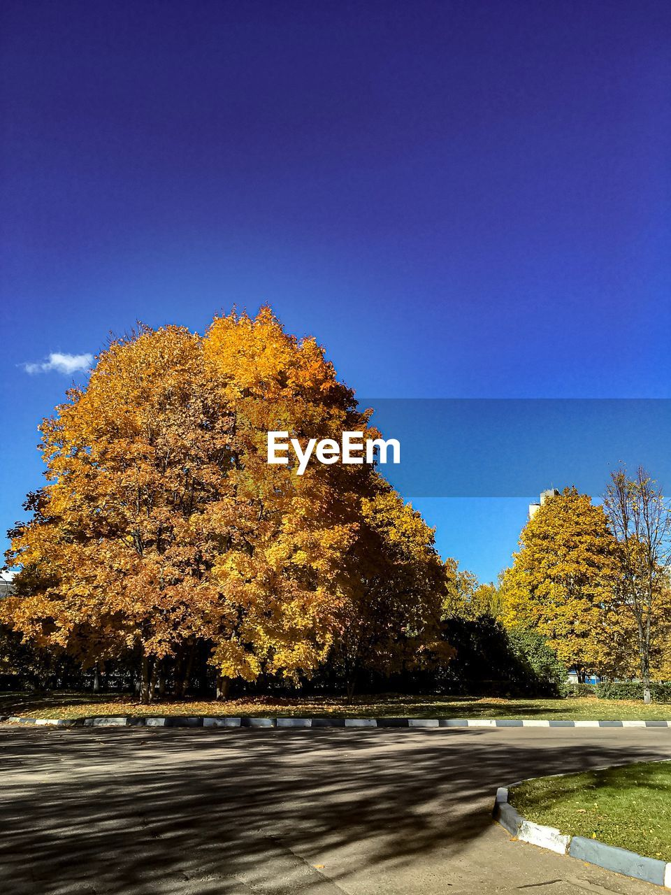 tree, plant, autumn, sky, nature, beauty in nature, blue, no people, change, transportation, clear sky, day, growth, tranquility, scenics - nature, outdoors, road, sunlight, tranquil scene, copy space