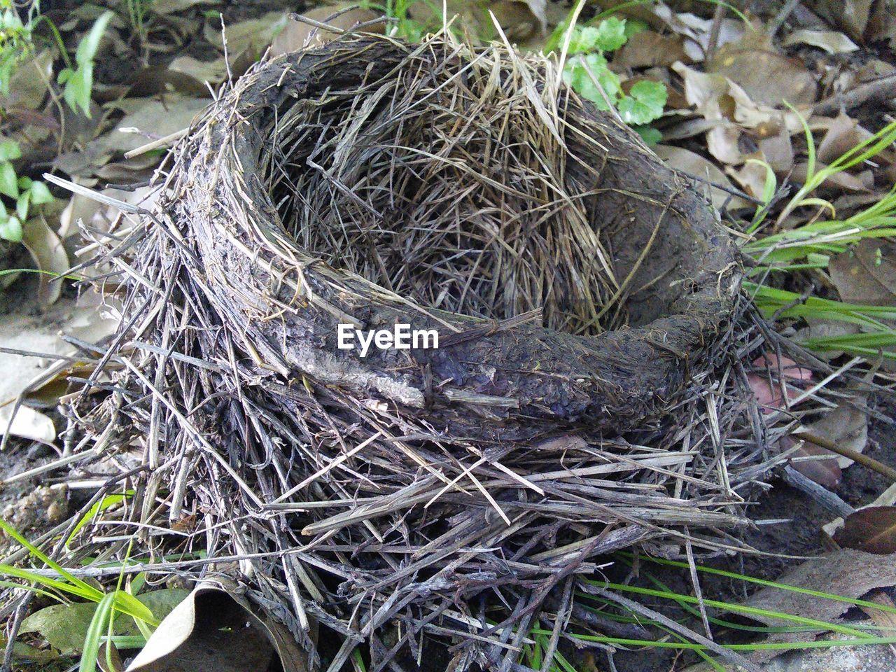 Close-Up Bird Nest