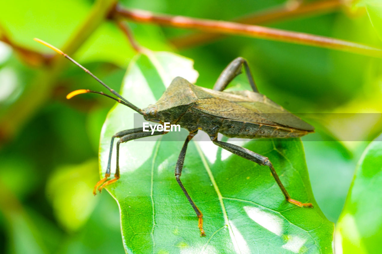 insect, invertebrate, one animal, animal themes, animal wildlife, animal, animals in the wild, plant part, green color, leaf, close-up, focus on foreground, nature, grasshopper, no people, day, plant, animal body part, animal antenna, zoology, animal eye