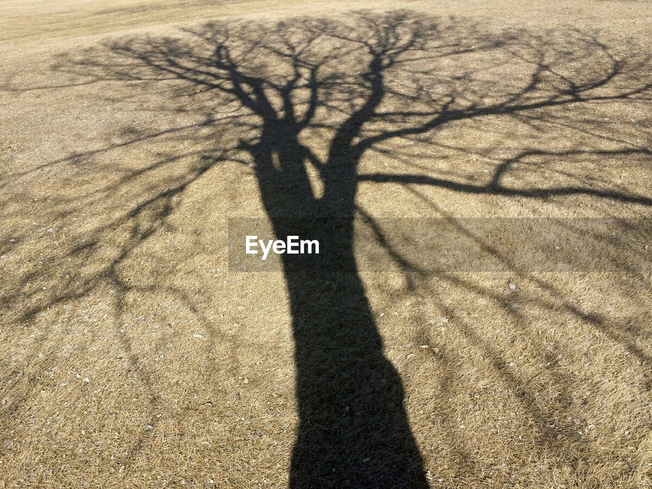 shadow, focus on shadow, sunlight, nature, bare tree, arid climate, tree, outdoors, desert, day, landscape, sand, branch, no people, sand dune, beauty in nature